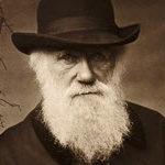 Darwin 300 x 150